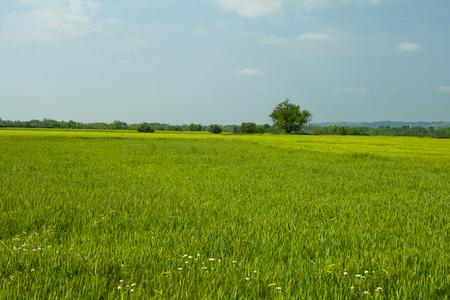 Green meadow under blue sky Banco de Imagens