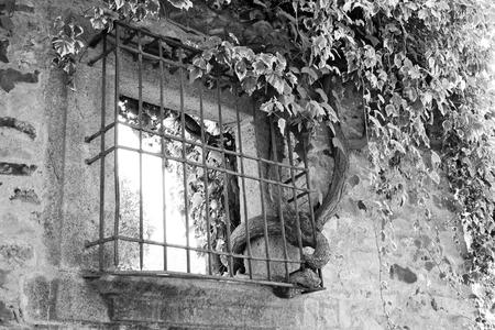 Black and white view of a creeper going through a window Banco de Imagens - 120659189