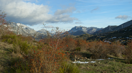 Rose hip plant with red fruits against a mountains landscape in autum Banco de Imagens - 120659094