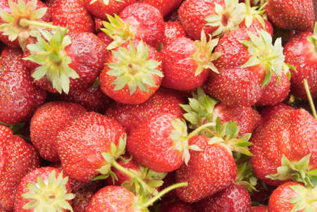 organic strawberries with leaves and stems attached.  Stock Photo
