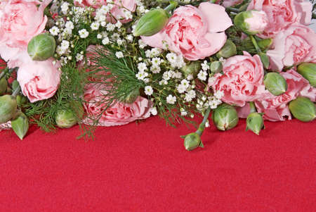 pink carnation flowers create a border on a red textured background.