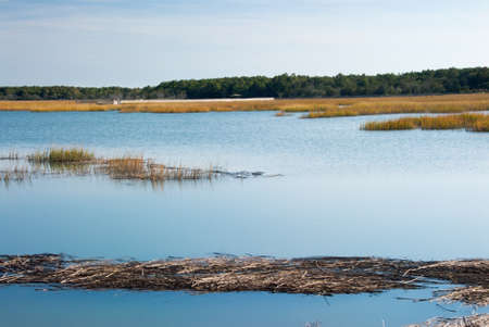 salt marsh: salt water marsh near Murrells Inlet, South Carolina. A mild breeze creates movement in the water and the grass.  Stock Photo
