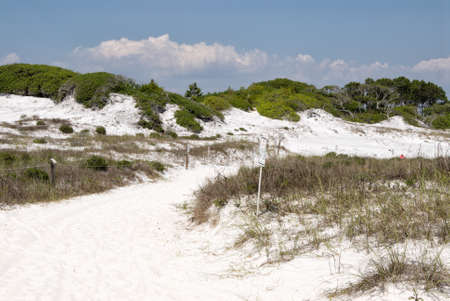 helen: Pathway of white sand near the Gulf of Mexico in Camp Helen State park at Panama City Beach Florida USA.