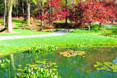 Beautiful autumn season landscape with a water lily pond. The maple trees are vibrant red and contrast beautifully with the bright green grass. The pond is filled with water lilies and some pink flowers. This was shot at Gibbs Gardens in Ball Ground Georg