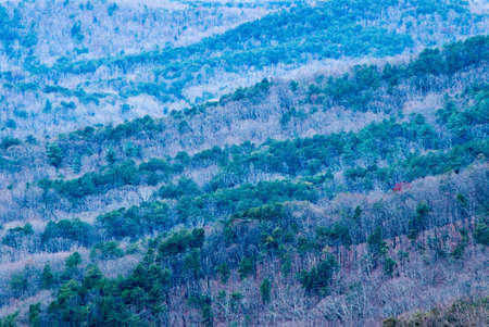 north ridge: Close up of the Blue Ridge Mountains in the Chattahoochee National Forest in the north Georgia USA Blue Ridge District. This image was shot right before sunset. Long exposure creates slight movement in the trees.