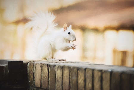 trait: White leucistic squirrel eating a peanut. This genetic trait is called leucism and is very rare in the wildlife kingdom. This is computer generated art from a photograph.