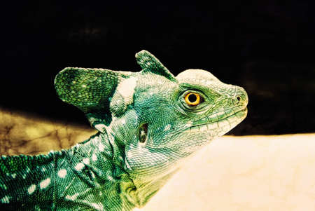 One male green crested basilisk reptile lizard with bright yellow eyes. Computer generated art from a photograph. Stock Photo