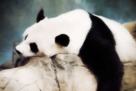 Giant Panda bear is lying on some rocks in a relaxed posture as he sleeps. This is computer generated art from a photograph. Stock Photo
