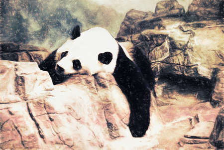 habitats: Giant Panda bear is lying on some rocks in a relaxed posture as he sleeps. This is computer generated art from a photograph. Stock Photo