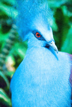 Blue colored western crowned pigeon aka common crowned pigeon or blue crowned pigeon. Binomial name is Goura cristata. This is computer generated art from a photograph.