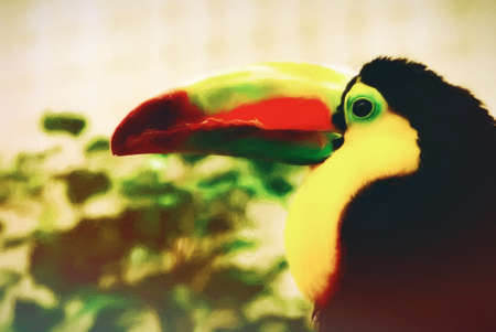 Profile of a beautiful multi colored toucan bird. Toucans are members of the family Ramphastidae of near passerine birds from the Neotropics. This is computer generated art from a photograph. Stock Photo