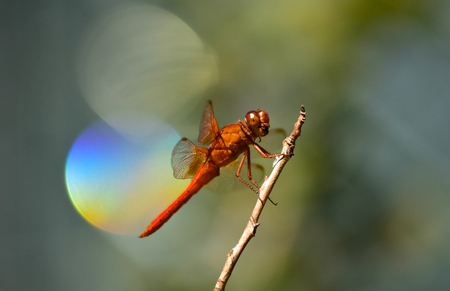 Dragon fly on a branch in close up with nice background 写真素材