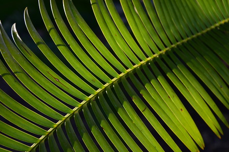 palm frond Stock fotó