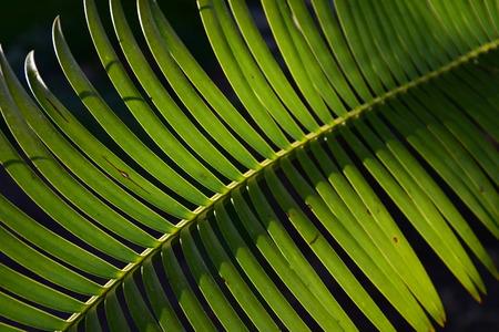 palmvarenblad