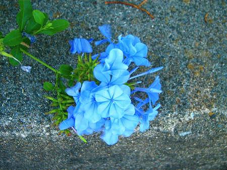Nature's Bouquet Banco de Imagens - 8040584
