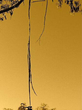 A Eucalyptus Branch in Dusk Light