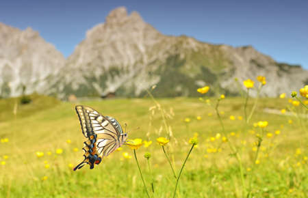 Mountain Butterfly 免版税图像