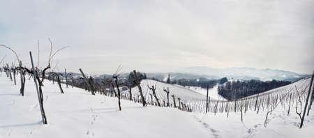 winegrowing: Vines