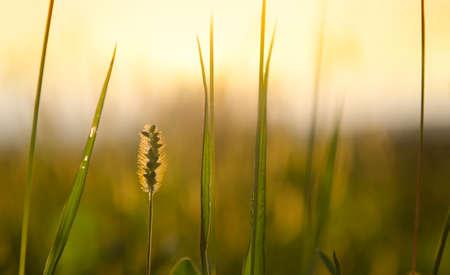 Blade of Grass 免版税图像