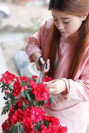 azaleas: An Asian girl is trimming the cuckoo,