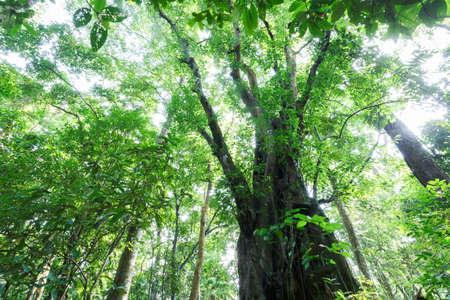 south east: Tropical rain forest in South East Asia