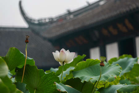 ancient buildings: The lotus   in front of The ancient buildings of Ming and Qing Dynasties