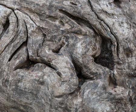 vigorously: The tree trunk texture background