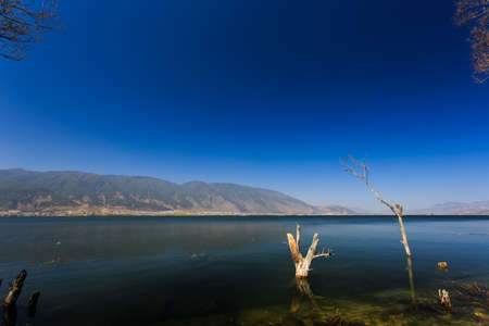 irradiation: The forest in  lake water