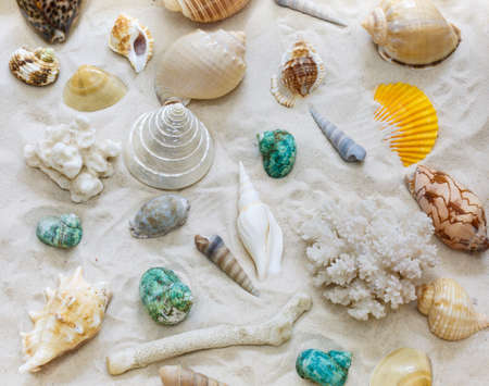 the residue: Different kinds of shells, conch shells in the sand Stock Photo