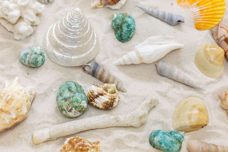 Different kinds of shells, conch shells in the sand Stock Photo