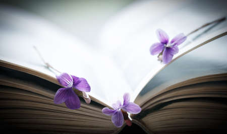 art book: Violet flower and open book, art background