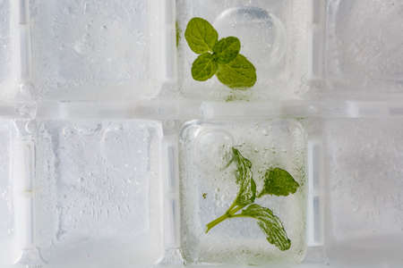 cool mint: ice-making box  filled with cool mint Stock Photo