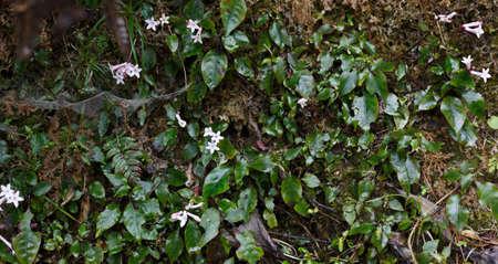 moist: White wild flowers on moist rocks