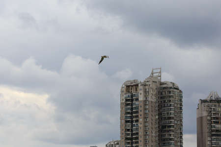 egrets: A white bird is flying over the city