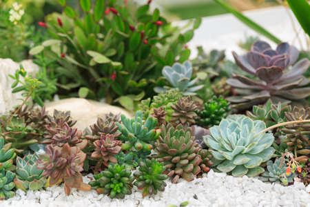 All kinds of potted succulents Stock Photo