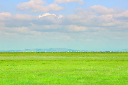 expanse: The vast expanse of grassland and the blue sky and white clouds