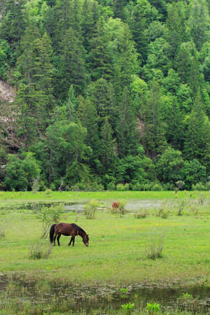 Pasture   and horses in the valley