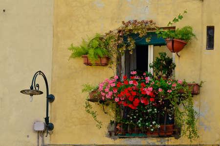 decorated window luca