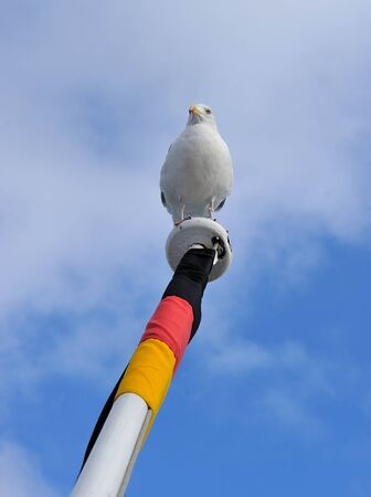 schleswig holstein: seagull at a flag pole