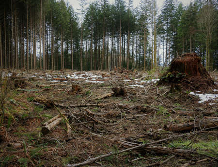 A clearcut section of a tree licence. Stock fotó