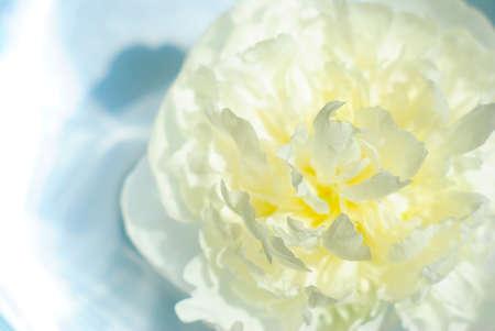 aroma bowl: white peony in aroma bowl