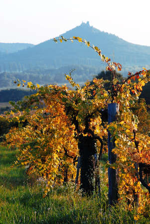 autumnal vineyard with a hill Stock Photo - 10034504