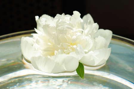 beautiful white peony flower in aroma bowl photo