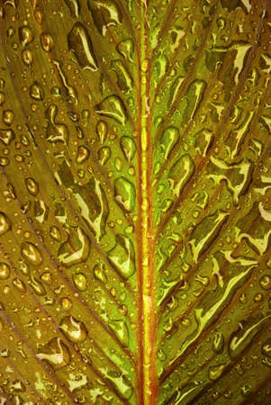 leaf detail with water drops photo