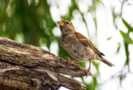 dead wood: a little sparrow standing on a big piece of dead wood