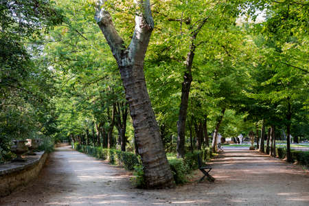 Beautiful landscape of footpaths among the trees in the park. Relaxing concept Stock Photo