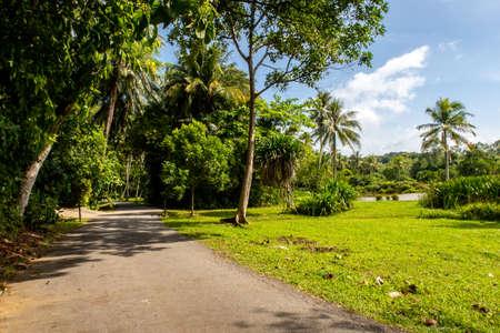 Rural remote unpaved road through tropical vivid green lush jungle, palm trees and on Pulau Ubin Island, Singapore.