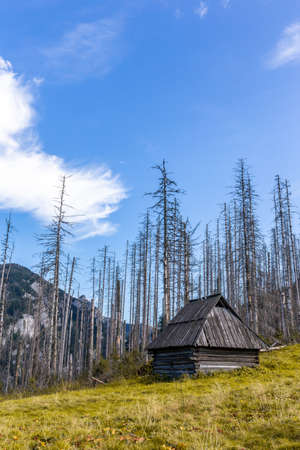 Old wooden shepherd's hut on a glade in Tatra Mountains, Poland, with dry dead pine trees and spruces in the background, autumn view, crystal blue sky. 版權商用圖片