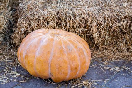 Single orange natural halloween pumpkin with haystack in the background, halloween decoration.