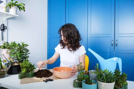 Side view of smiling young brunette curly hair Caucasian woman replanting houseplants, cheerful millennial female gardener take care of domestic succulents, enrich cultivate ground, gardening concept